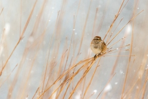 Winter scenes (Rona Neri-Bergmann)