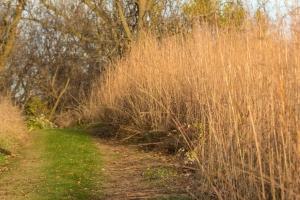 Prairie trail (Rona Neri-Bergmann)